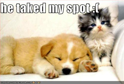funny puppies and kittens - photo #25