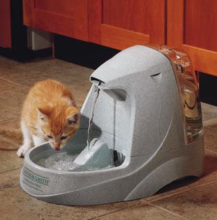 p-26649-37538P-cat