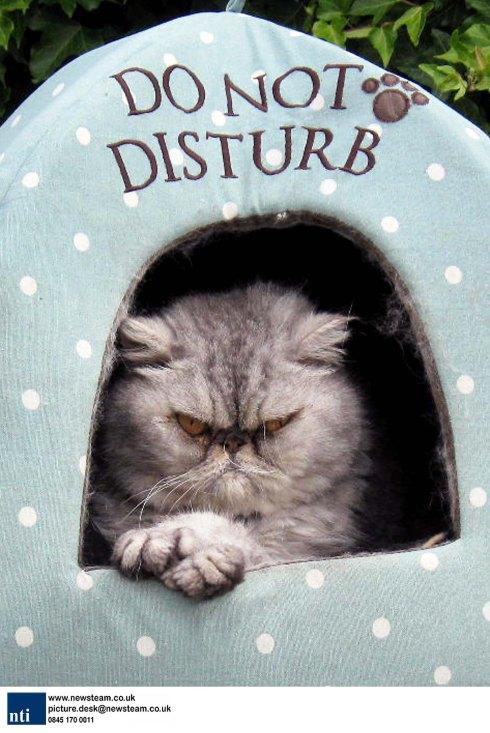 BRITAIN - Strop Cat