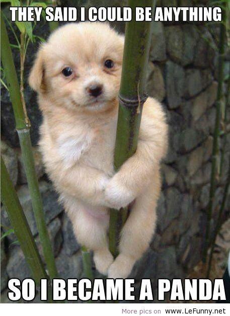 Funny-PandaDog