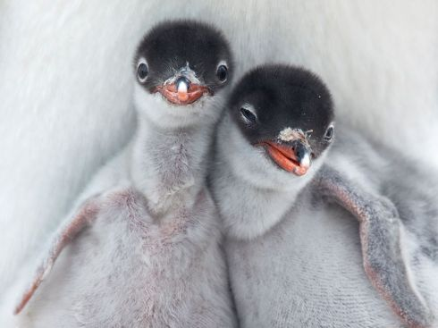 animals-photos-2012-20